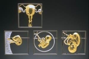 SEED: Implantation, Embryo, Sensation, Engaged